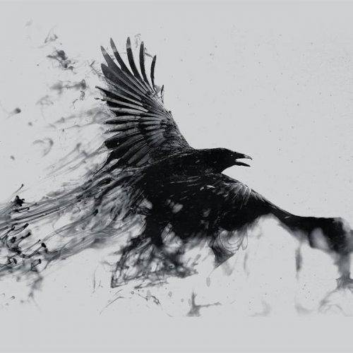 BLVCK BIRD